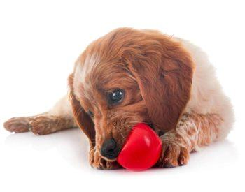 Quels sont les jouets les plus appréciés des chiens ?